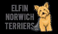 Elfin Norwich Terriers